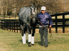 Black Tie Affair - 1991 Horse of the Year. Sired 35 stakes winners, including grade I winner and fan favorite Evening Attire.