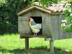 The henhouse, Charente Maritimes, France