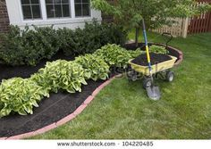 Mulching bed around the house and bushes, wheelbarrow along with a shovel.