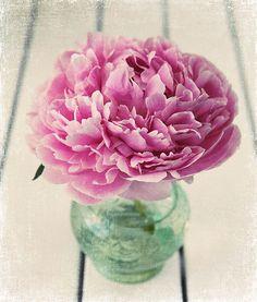 peonies = prettiest.flowers.ever!!!!
