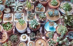 3D列印 【Bazaj】 @ Ping-Tian model studio :: 痞客邦 :: 3d Printed Robot, Sock Bunny, Planting Succulents, Crate And Barrel, Agriculture, Crates, Garden, Plants, Terrarium