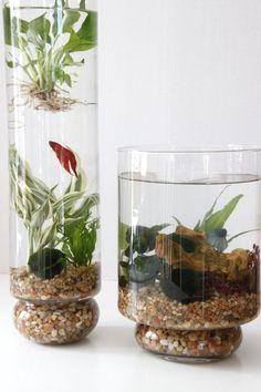DIY: Indoor Water Gardens