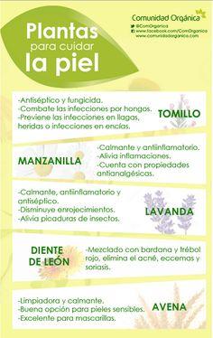 Cuida tu piel con estas plantas... http://bit.ly/ComOrganica