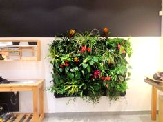 LUSH Cosmetics is on board with our Living Walls | Greenstems