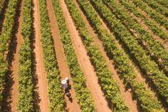 Sardinia, Wines, Vineyard, Country Roads, Outdoor, Italia, Outdoors, Vine Yard, Vineyard Vines