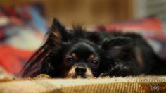 породы маленьких собак с фотографиями и названиями
