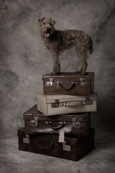 What my dog does when the suitcases come out. Think she's trying to tell me something!=)