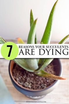 Rock Garden Landscaping 7 Reasons Your Succulents are Dying Do you love the look of succulents but cant seem to keep them .Rock Garden Landscaping 7 Reasons Your Succulents are Dying Do you love the look of succulents but cant seem to keep them . Succulent Care, Succulent Gardening, Succulent Terrarium, Garden Plants, Container Gardening, Indoor Plants, Gardening Tips, Terrariums, Organic Gardening