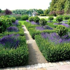 Parterre-lakes-in-Berkshire-by-Jo-Alderson-PhillipsParterre-lakes-in-Berkshire-by-Jo-Alderson-Phillips Le jardin de l'orangerie du parc de Sceaux (Hauts-de-Seine) Paris Garden Styles: What type is right for you? Boxwood Garden, Topiary Garden, Boxwood Hedge, Topiary Trees, Formal Gardens, Outdoor Gardens, Modern Gardens, Formal Garden Design, French Formal Garden