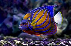 Strip blue by Toni Panjaitan - in deep sea Click on the image to enlarge.