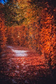 Autumn in Vienna, Austria by Patrycja Kasprzycka   www.kasprzycka.at   Instagram @p.kasprzycka   #fall #autumn #city #travel #leaves #bokeh #trees #vacation #sun #vienna #austria #photography #europe #shadow Vienna Austria, Autumn, Fall, Bokeh, Country Roads, Trees, Europe, Leaves, Graphic Design