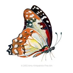 No102 Perched White Lady Butterfly 8x10 by AmyKirkpatrickArt, $25.00