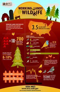 working lands for wildlife - USDA NRCS