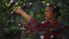 Homegrown Swedes: Cherry Cordial
