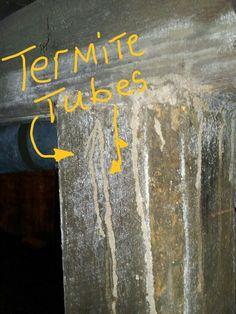 #Termite tubes