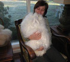~ Giant Angora Rabbit ~