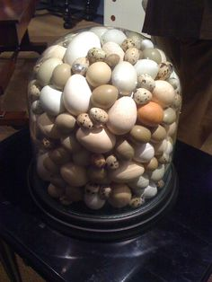 ∷ Variations on a Theme ∷ Collection of eggs