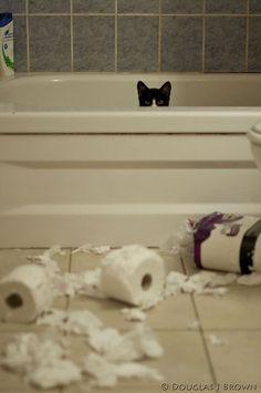 사고친 고양이