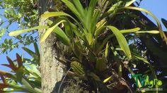 Conexiones: Capitulo 4: vegetación exuberante.
