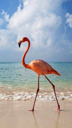 Flamingos walking on the beach so pretty