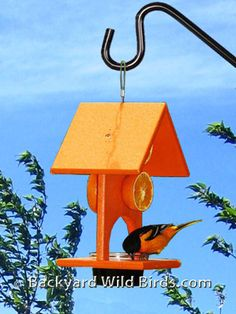 Oriole Fruit Jelly Bird Feeder in bright orange color attracts Orioles. Oriole bird feeder holds more than most fruit & jelly feeders and 4 orange halves Oriole Bird Feeders, Large Bird Feeders, Bird House Feeder, Diy Bird Feeder, Squirrel Feeder, White Bird Tattoos, Hanging Bird Cage, Black And White Birds, Bird Bath Garden