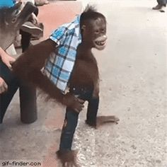 Monkey getting impatient | Gif Finder – Find and Share funny animated gifs