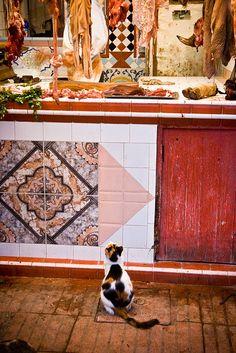 BUTCHER SHOP-- Cat & butcher's shop - Morocco (Essaouira)