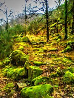 Boa tarde  :D O encanto mágico dos velhos caminhos de pedra com cobertura de musgo nas montanhas de Arcos de #Valdevez Onde as cores do Inverno são mais fortes Imagem captada perto da Travanco Mezio - http://ift.tt/1MZR1pw -