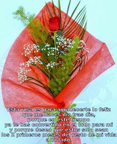 Rosa roja con mucho amor