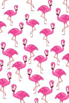 Inspiração do dia - Flamingos - BLCKDMNDS