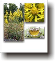 Plante medicinale – SPLINUȚA Spiritual, Varicose Veins, Plant