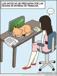 Si tienes gatos lo entenderás :)