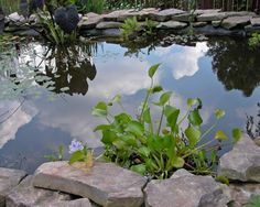 From whimsical fountains to quiet pools, check out these great garden water…