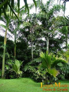 Hopefully, someday, I'll be able to look out my window and see palm trees:)