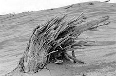 Robert Landsburg's Brave Final Shots · Lomography