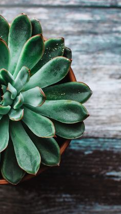 Your one stop shop for finding and sharing a variety of amazing, thought provoking, and stunning wallpapers for your smartphones, tablets & other. Succulents Wallpaper, Plant Wallpaper, Green Wallpaper, Cacti And Succulents, Flower Wallpaper, Wallpaper Backgrounds, Succulents Drawing, Propagating Succulents, Planting Succulents