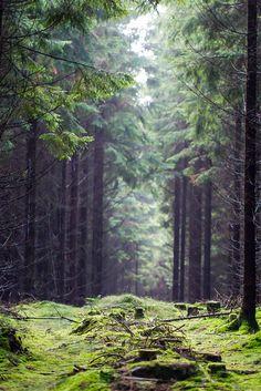 trollska skogar, mystik, klara färger