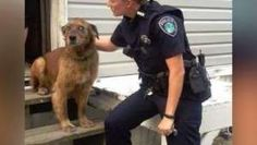 Police Officer Steps Up To Help Dog Living In Deplorable Conditions