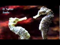 Hipocampos: amor al extremo