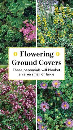 Flowering Ground Cover Perennials, Perennial Ground Cover, Flowers Perennials, Planting Flowers, Shade Flowers Perennial, Shade Garden, Garden Plants, Garden Art, Garden Ideas