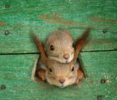 Funny animal pictures for this week, funny animal pictures, funny animals, animal pictures, cute animals Cute Squirrel, Baby Squirrel, Squirrels, Cute Baby Animals, Animals And Pets, Funny Animals, Wild Animals, Funny Animal Photos, Animal Pictures