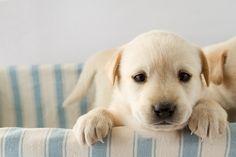 Black Sheep Organics : Organic Grooming Goods for Dogs