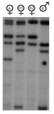 Interpreting DNA Profiles