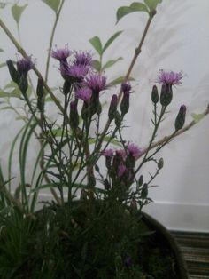 2014.9.16植え替え植物