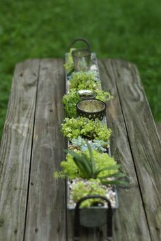 Sedum and other succulents in rain gutter planter