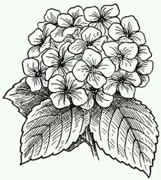 Need some drawing inspiration? Here's a list of 25 beautiful flower drawing ideas and inspiration. Why not check out this Art Drawing Set Artist Sketch Kit, perfect for practising your art skills. Flower Coloring Pages, Colouring Pages, Coloring Books, Art Floral, Beautiful Flower Drawings, Drawing Flowers, Flower Drawing Images, Flower Line Drawings, Floral Drawing