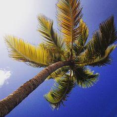 "Repost from Instagram ! #WeLike ! #Madinina by @helenemariani ""#martinique #madinina #palmtree #nature #traveling #travel #summer #happy #enjoy #paradise #amazing #caribbean #sun #tropical #instagood #instamoment #like #love #like4like #likeforlike #follow #follow4follow #followforfollow #picoftheday #photooftheday #iphone #iphonesia #instalike"" http://ift.tt/1DD5yY4"