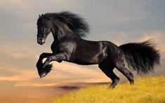 horse - Szukaj w Google
