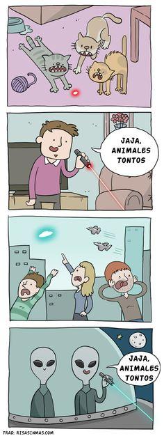 Animales tontos #compartirvideos.es #videosgraciosos