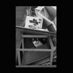https://flic.kr/p/AcS3Xm | Shijimi October 2015  #cat #smallcats #blackandwhitephotography